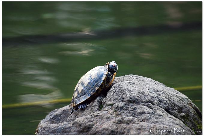 Turtle Sunny