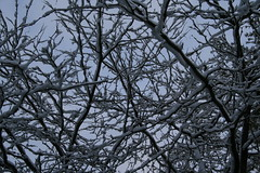 Cold Branches (TonyNewMoon) Tags: snow ilovenature michigan newyear ibeauty