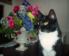 """ i love to pose for mom "" (Lynn 3nglish, catching up) Tags: flowers cat happy interesting pretty boots sweet clarity fresh goodshot refreshing angelic pleasent fesh tunafish naturesfinest colortones catssniffingflowers abigfave kissablekat citritgroup catsshowoffyourcat catsshowoffyourcats creativephopt"