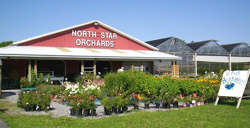 NorthStarOrchards