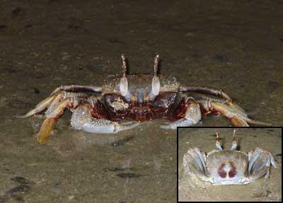 Crab-P1050812