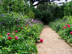 Hidcote Garden, Cotswolds, Gloucestershire (UGArdener) Tags: pink flowers green gardens garden spring path lavender cotswolds gloucestershire pastoral nationaltrust allium peonies springtime bucolic englishcountryside hedges artsandcrafts englishgardens centenary gardendesign 100years hidcote mayinengland gardenpaths springtimeinengland lawrencejohnston gardenrooms 100yearsasagarden