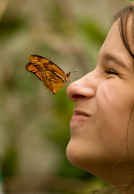 Surprised by a butterfly