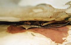Its only what you see.... ([ Kane ]) Tags: art film leaf australia bark scanned twig qld marco kane twigs gledhill kanegledhill vivitarv2000 humanhabits wwwhumanhabitscomau kanegledhillphotography