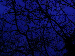 Arms of Night (chaoskuchen) Tags: wood blue silhouette contrast dmmerung blau ste kontrast daybreak