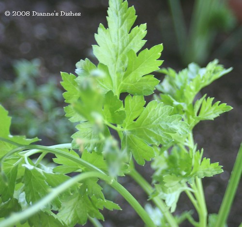 Herb Box Flat Leaf Parsley
