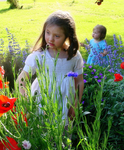 Poppies.......