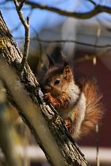 A baby squirrel