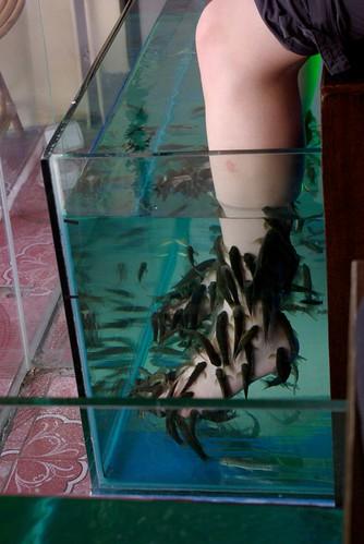 Fish Spa!