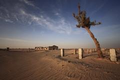 Desert after war (Qais Alamar) Tags: tree canon war desert mark ii 5d kuwait 1740 q8 qais alamar