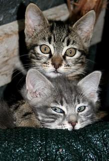 Stray cats...