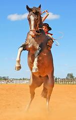 Cara a cara (Eduardo Amorim) Tags: brazil horses horse southamerica brasil caballo cheval caballos cavalos pferde cavalli cavallo cavalo gauchos pferd riograndedosul pampa hest hevonen campanha brsil chevaux gaucho  amricadosul bag fronteira hst gacho  amriquedusud galope  gachos  sudamrica suramrica amricadelsur  sdamerika jineteada   flickrsbest americadelsud gineteada  americameridionale campeiros campeiro eduardoamorim