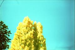 Naturaleza cruzada (Troáns) Tags: madrid blue autumn friends españa dog amigos fall film yellow azul backlight 35mm contraluz lomo xpro lomography crossprocessed spain kodak doubleexposure toycamera guadalajara perro amarillo otoño 8m e100vs smena analogic analógico c41 cruzado pueblosnegros xproed