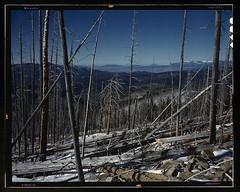 Sangre de Cristo Mountain, New Mexico  (LOC) (The Library of Congress) Tags: trees mountains newmexico vintage