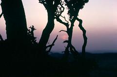 Sunset on Mt. Meron (boxelf) Tags: sunset tree israel dusk galilee meron mtmeron