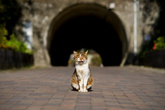 pose with smile (Masakazu Ikeguchi) Tags: smile japan cat nikon neko d200  straycat kitakyusyu  100fav catspotting    masakazuikeguchi belovedstraycat