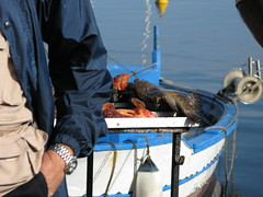 ... (RoBeRtO!!!) Tags: blue sea 15fav food fish reflection water beautiful boat cool barca mare arm wristwatch acqua azzurro orologio cibo pesce braccio riflesso rdpic canong7