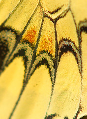 Butterfly scales Punched up