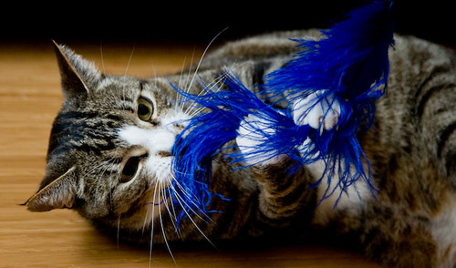 Bert and the Blue Feather