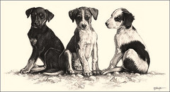 'Siblings' - Stray Pups - Fine Art Pencil Drawings www.drawntonature.co.uk (kjhayler) Tags: pictures street family portrait blackandwhite dog pet baby pets art dogs monochrome animal animals illustration pencil portraits painting puppy sketch photo mutt artwork pups puppies babies photos drawing fineart paintings young picture illustrations drawings canine litter domestic mutts stray prints doggy pup doggies mongrel hounds puppys strays animalart petportrait dogpictures photopets puppie doggys puppydogs petportraits petphoto pencilwork pencildrawings petdog mongrels dogpicture litters domesticdogs petphotos puppylitter petpictures petdogs puppypictures puppyphoto puppyphotos puppypicture petpicture picturepets photospuppies picturesofpuppies