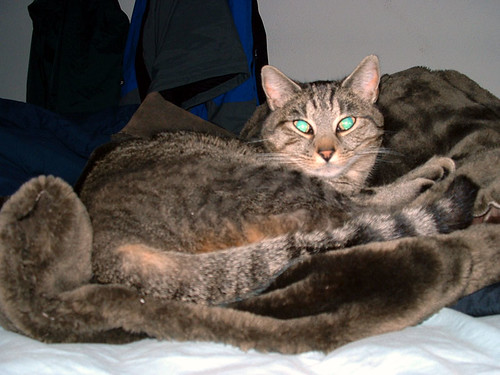 Teegrr on Gella's coat