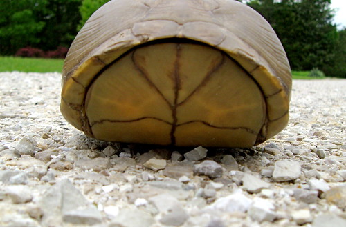 Giant turtle!