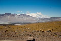 Ellas (leandrobasello) Tags: pasosanfrancisco montaña mountain llamas travel viajar