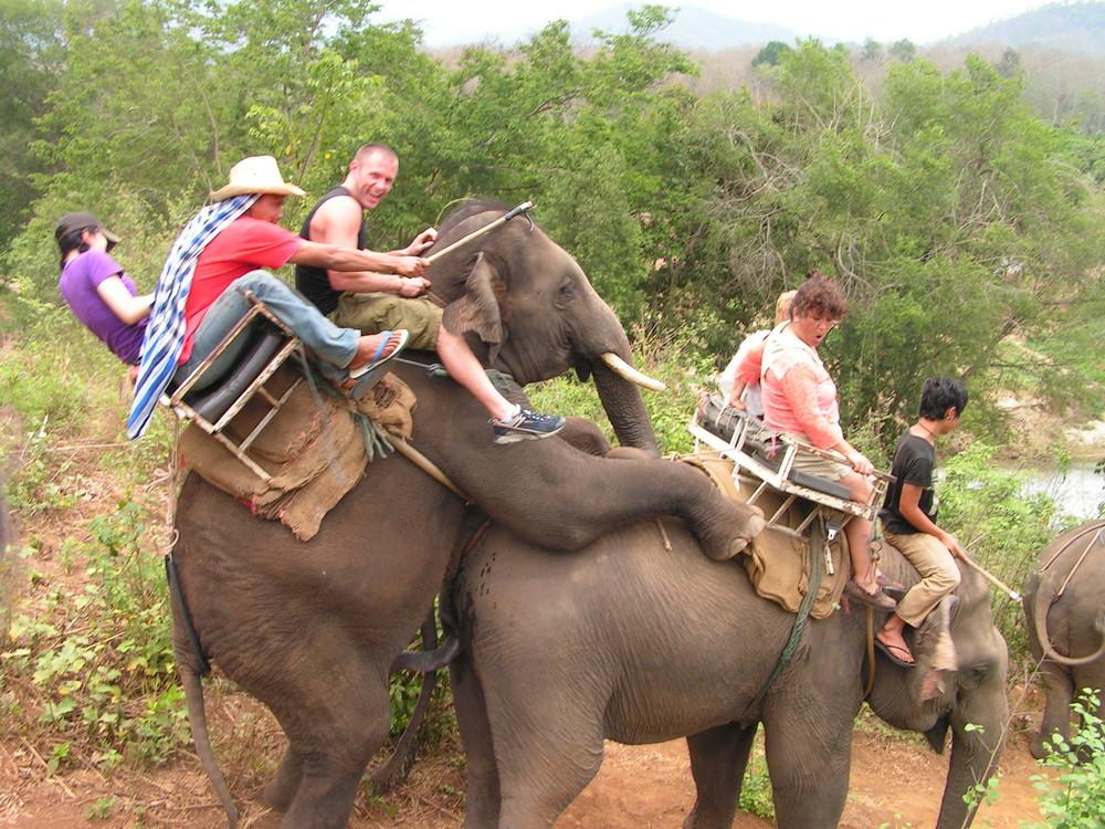 elephant-conga-885