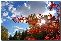Autumn's Glory (Roger Lynn) Tags: autumn trees sun fall colors leaves clouds moscow arboretum bluesky idaho flare universityofidaho palouse blueribbonwinner anawesomeshot impressedbeauty superaplus aplusphoto