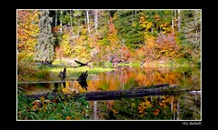 Fall Reflections (Bonell Photography (dasbull)) Tags: light red usa color colour green art texture love tourism nature beautiful beauty yellow contrast photoshop work dark real fun lumix us photo washington amazing cool fantastic log artwork niceshot shot angle natural northwest image awesome feel great joy perspective picture atmosphere location best sharp panasonic frame passion pacificnorthwest pro northamerica wa washingtonstate pnw tone borders authentic exciting generic graysharbor fz50 amature joyfull beaverpond blueribbonwinner humptulips hoquiam fallreflections dmcfz50 panasonicdmcfz50 superbmasterpiece diamondclassphotographer dasbull splediferouse photosexplore