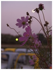 Today's Photo 071024 #02