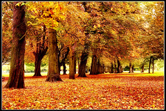 Autumn in Manchester (i.rashid007) Tags: park uk autumn trees landscape manchester longfordpark 35faves passionphotography golddragon aplusphoto ultimateshot superbmasterpiece platinumheartaward theperfectphotographer