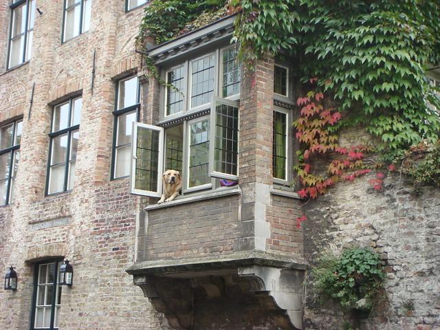 The Bruges canal dog