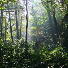 The Enchanted Forest (Heaven`s Gate (John)) Tags: autumn trees mist green nature grass fog forest landscape botanical woods atmosphere enchantedforest witleycourt johndalkin heavensgatejohn