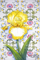 Yellow and White Iris on Blue, Print by Elizabeth Ruffing