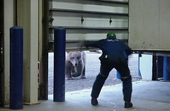 Brown Bear (Master Ronin) Tags: bear brown alaska bay surprise prudhoe