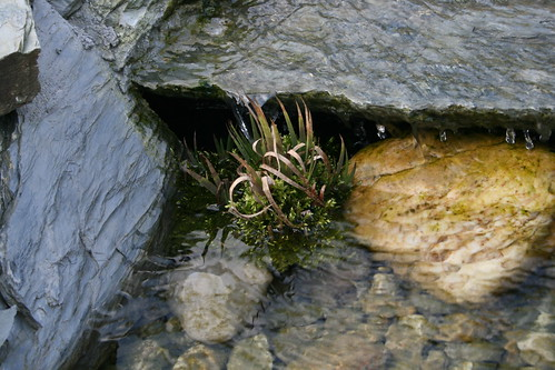 Plant in water