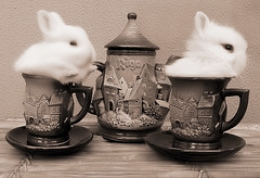 Shaked Milk & Rabbit Tea (Firenzesca) Tags: rabbit bunny cup coffee sepia milk tea latvia riga abigfave theperfectphotographer