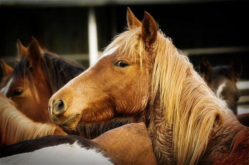 gathering mares 391