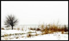 Winter (Amy V. Miller) Tags: winter white snow tree artistic expression blueribbonwinner artisticexpression fineartphotos superbmasterpiece diamondclassphotographer flickrdiamond goldsealofquality theperfectphotographer picturefantastick artisticexpresssion