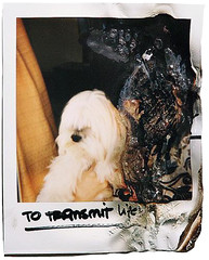 don't get any big ideas, they're not going to happen (i'm so pale, goddamn) Tags: life portrait dog white yellow polaroid weird curtain burn tiny shit sharpen burned smells eso itself alguien dijo bloggg polalife transmite
