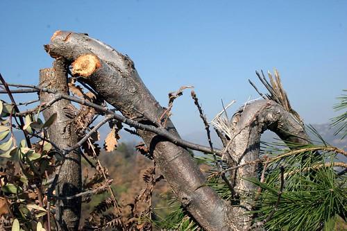 arbre cassé chasseur