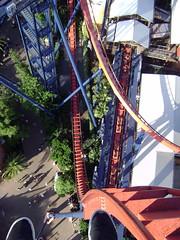Sheikra! (kevkev44) Tags: tampa ride bm rollercoaster coaster buschgardens buschgardenstampa bga sheikra tampaflorida bushgardens kumba bgt buschgardensafrica divemachine