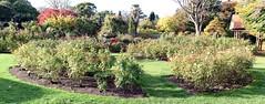 Rose Garden (BitKeeper82) Tags: newzealand christchurch rose monavale avonriver