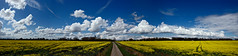 Blue and Yellow (GI Les) Tags: sky panorama yellow clouds gold angle country wide rape gloucestershire crop lane fields rapeseed northleach oilseed