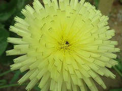 Fleur (AleFletcher) Tags: art fleur perfect photographer photos earth fine save picturesque the mywinners platinumphoto flowersmacroworld iamflickr auniverseofflowers