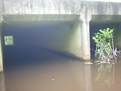 Through Bridge with beaver dam blocking one side