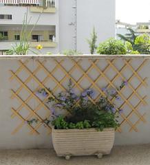 Il giardino verticale