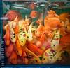 a crowded tank (samthe8th) Tags: fish hongkong tank goldfish sam faces many painted arr mongkok kok crowded mong princeedwardstation d700 flickrchallengewinner kanchenjungachallengewinner tphofweekendchallenge f64g34r5win f64g34champ