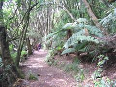 IMG_4021 (kenorrha) Tags: newzealand nznorthisland scenicsnotjustlandscapes